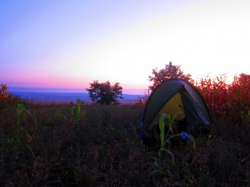 An early morning view from my tent, in a maize field in Moldova